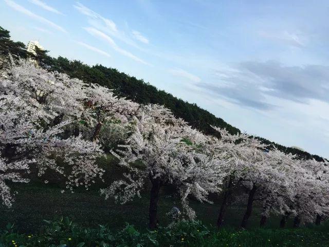 校际联谊赏樱会活动通知